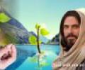 Các bài suy niệm Chúa nhật 27 C