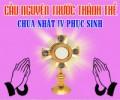 Cầu nguyện trước Thánh Thể- Ngày 03.05.2020 – Chúa nhật IV Phục sinh – Ga 10,1-10